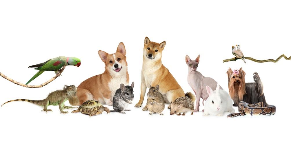 Randagismo ed animali d'affezione